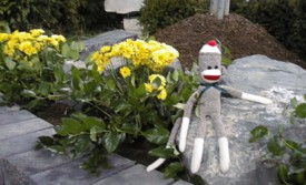 sock monkey in the flowers