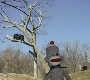 sock monkey with chimps